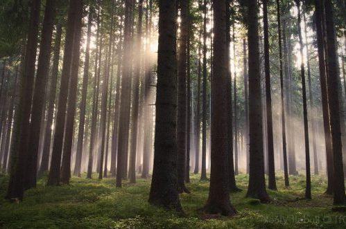 Protegiendo Medio Ambientes Frágiles